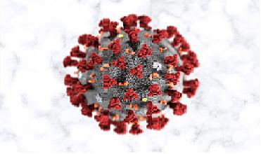Analisi Sierologiche Covid-19 Tamponi Antigenici (Ag) e Molecolari (PCR)